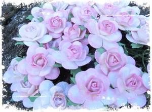 Bilde av Papirdesign - Roser - 2,5cm - Farget kant - Rosa