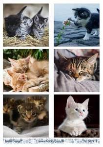 Bilde av Barto Design - Klippeark A4 - 067919 - Cats