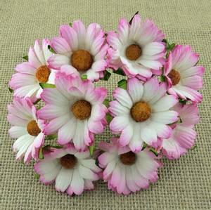Bilde av Flowers - Chrysanthemums - SAA-272 - 2-Tone Pink - 50stk